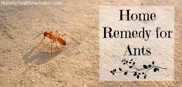 home remedy for ants that works